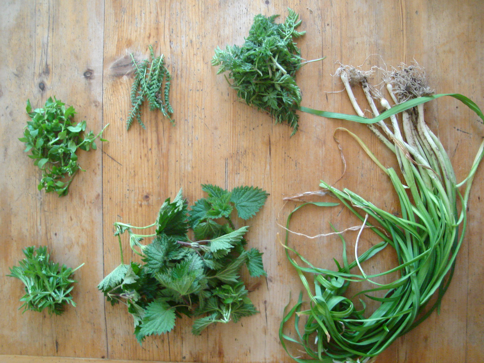 Mad March Spring Foraging