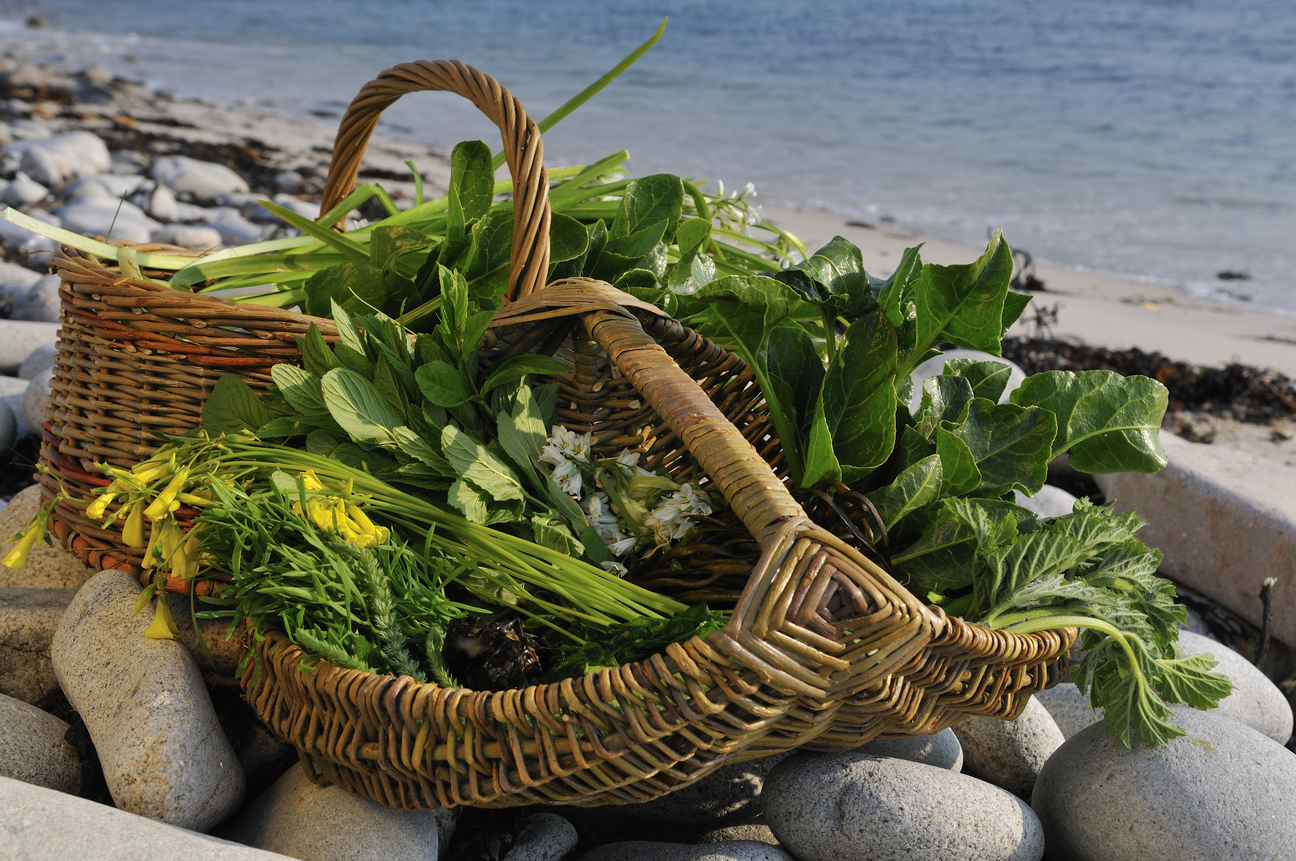 Foraging, Yoga and a Paleo Diet