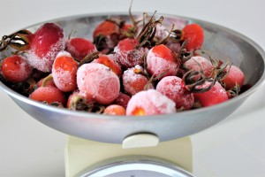 Weighing scales full of foraged rosehips
