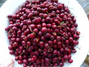 bowl of hawthron berries