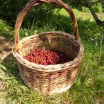Hawthorn Berry Fruit Leather