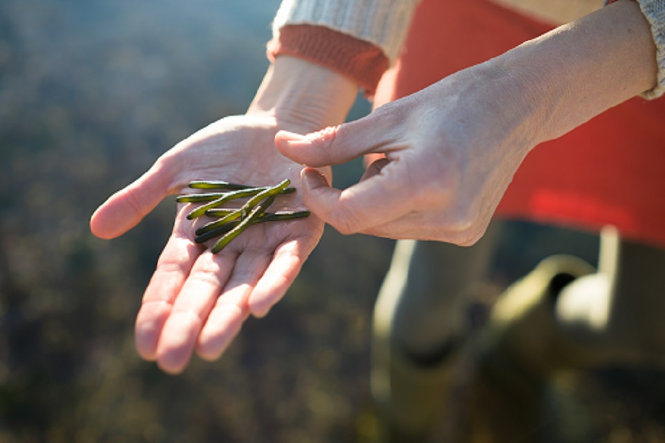 Velvet horn seaweed in my hand