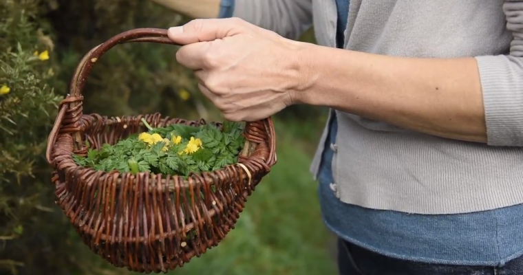 Foraging Video: Pennywort and Why Children are Good Foragers