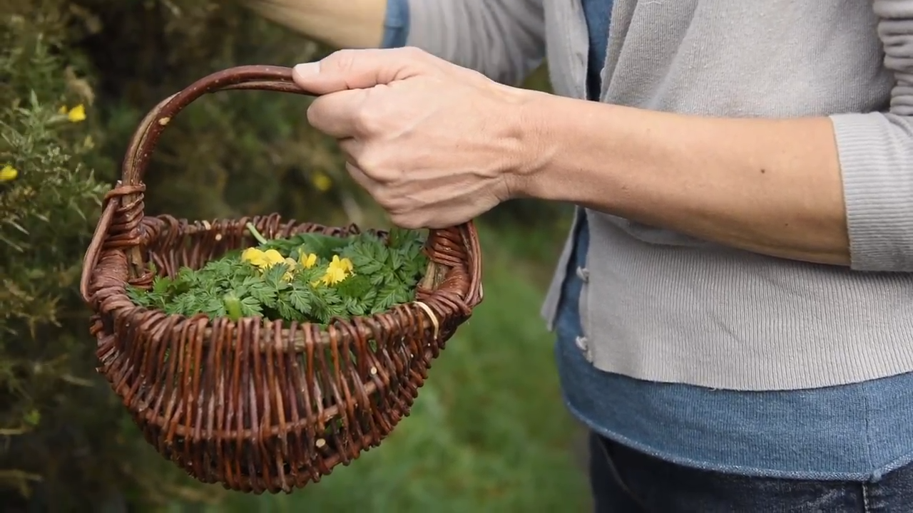 How Pennywort Inspired Me to Forage and Other Joys of Foraging