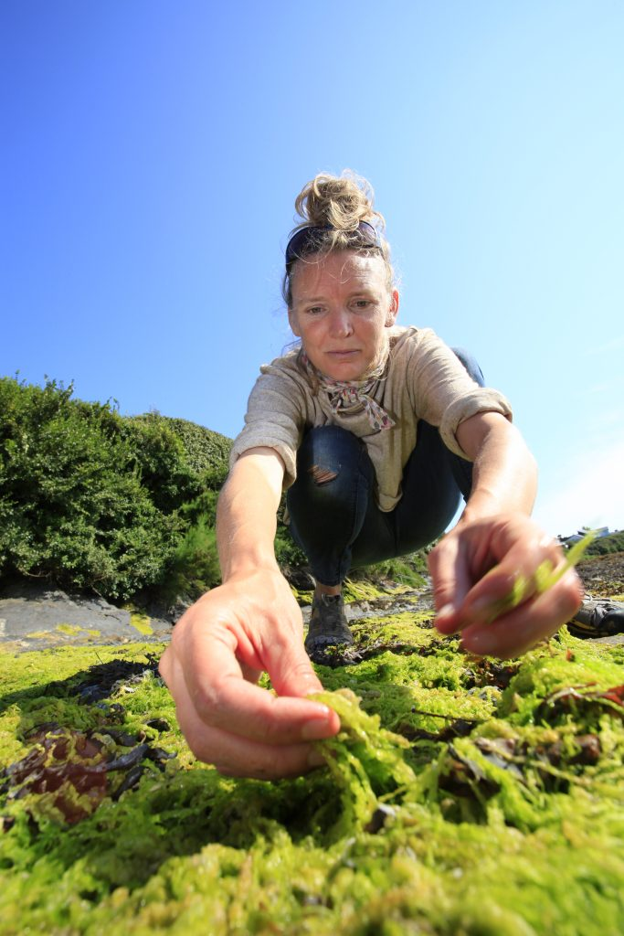 Rachel Lambert harvesting green seaweed