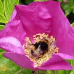 Foraging: Free Gifts, Freely Given
