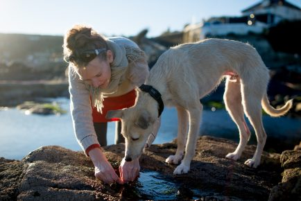 picking seaweeds from a rock pool