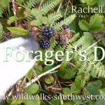 A Forager's Dog – Paddy foraging Blackberries