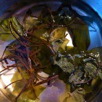 Thongweed, Kelp and Sugar Kelp soaking