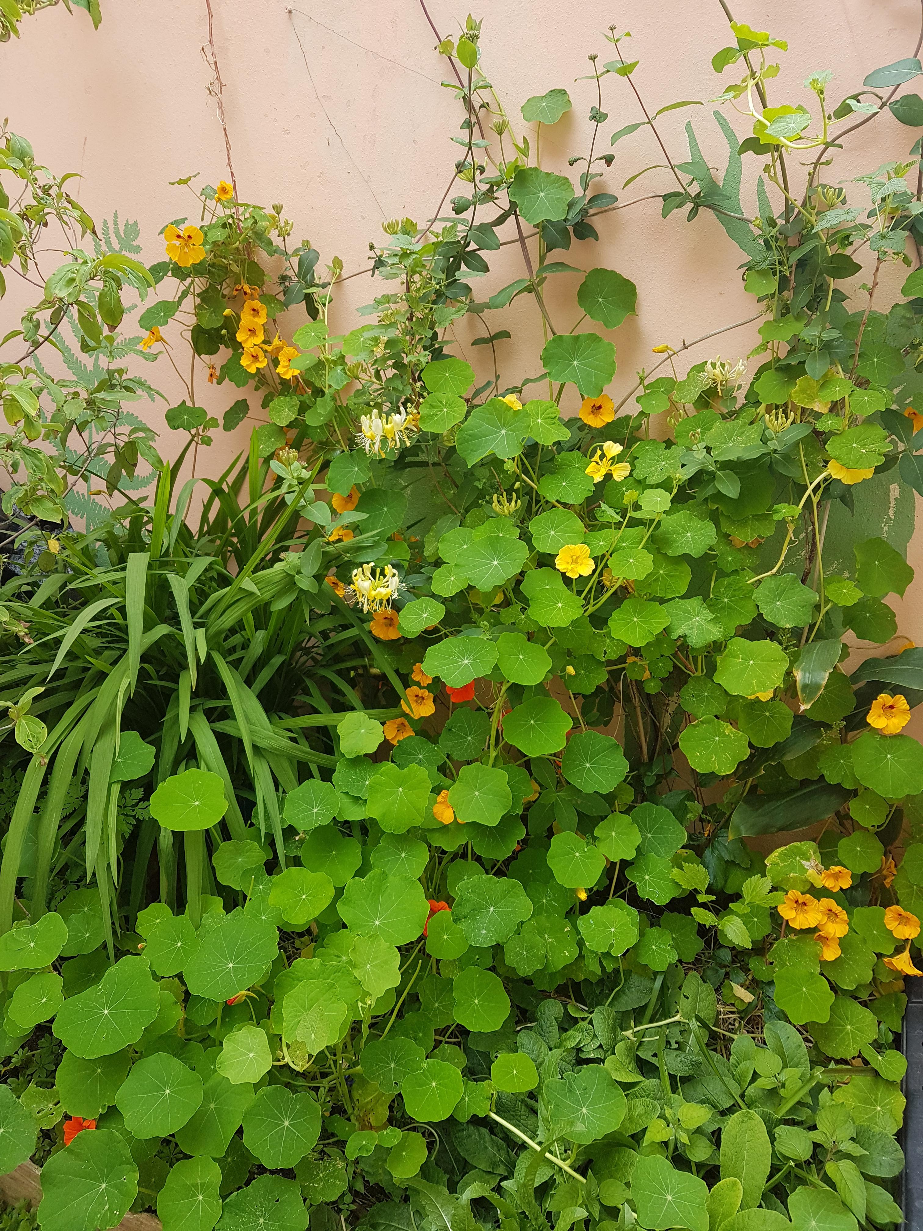 Forager Rachel Lambert's small box garden