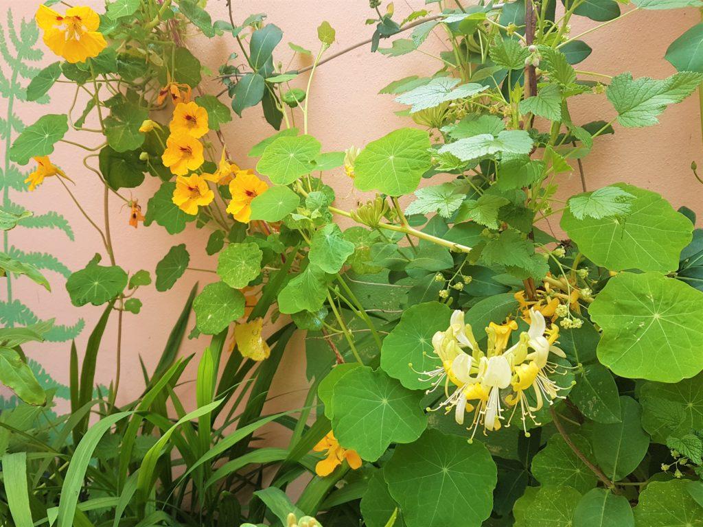Trailing plants in my garden