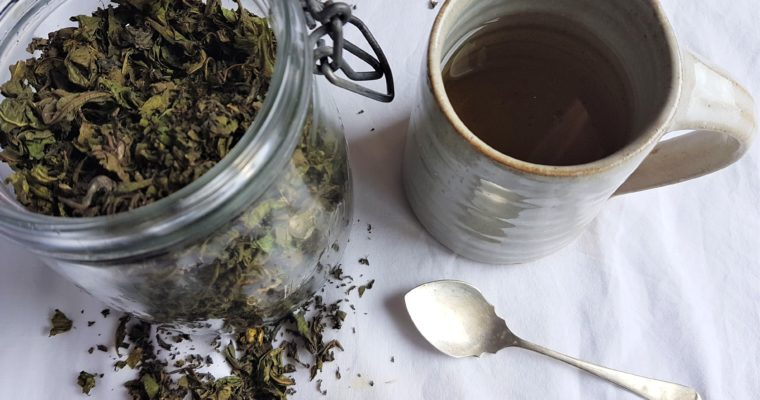 A Humble Cup of Wild Fermented Tea