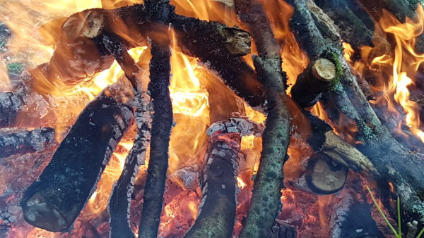 Autumn foraging course with songs, fire and tasters