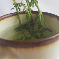 Mug of yarrow herbal tea