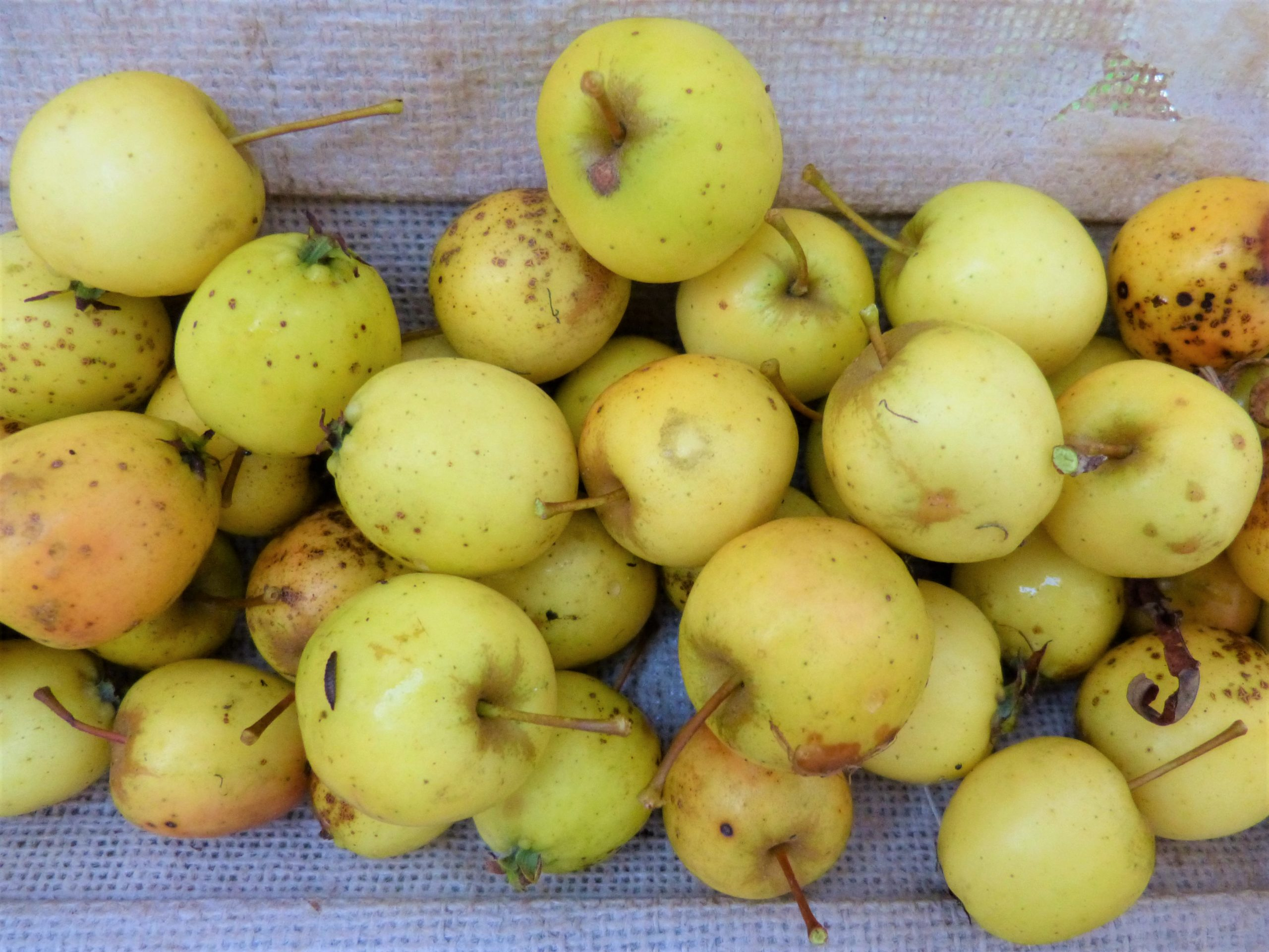 Wild Apple Curd Recipe