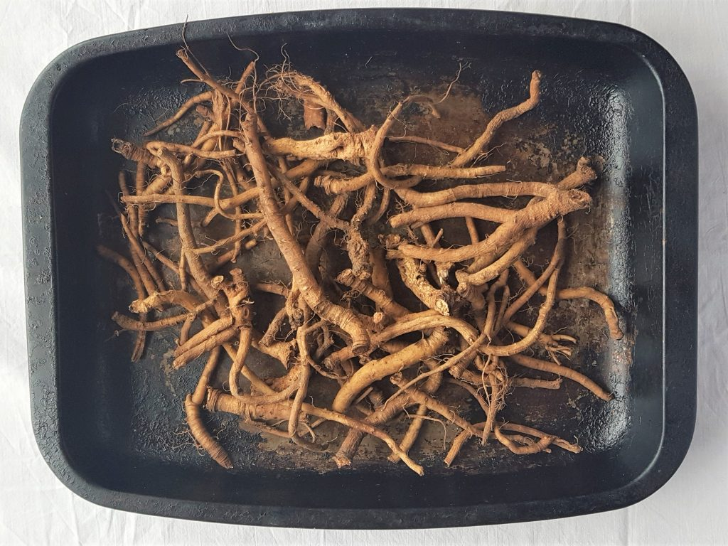Drying dandelion roots for coffee
