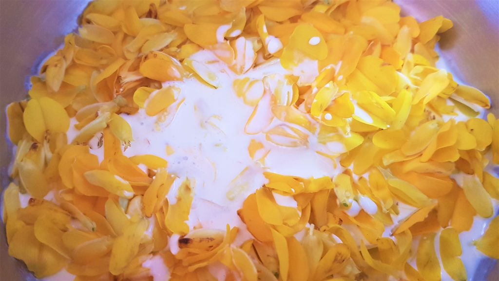 Gorse flowers infusing in cream