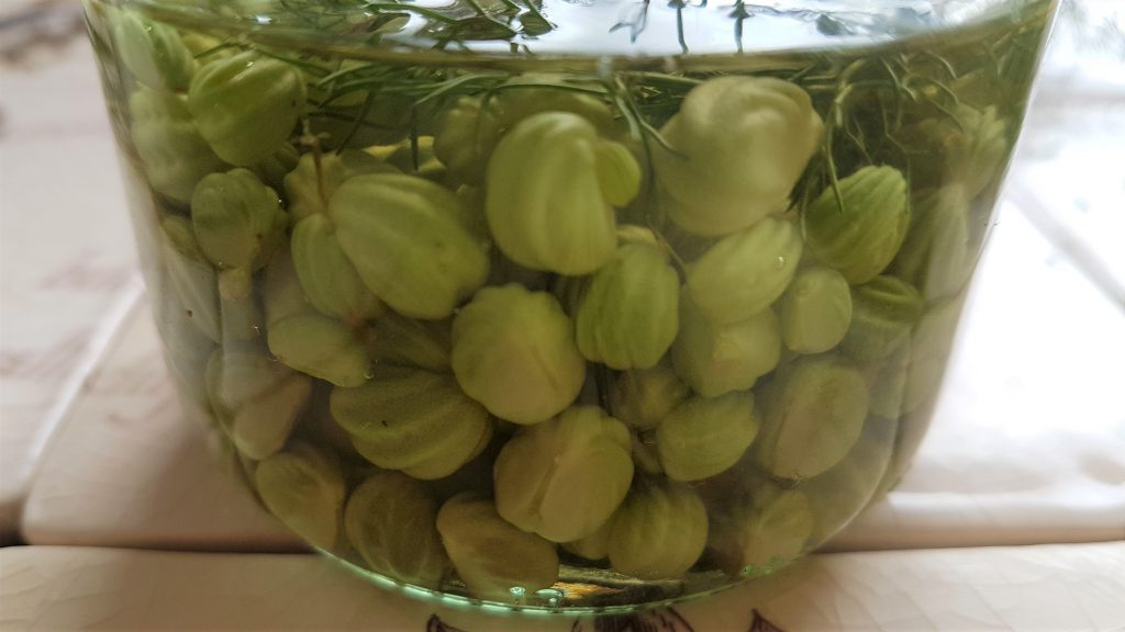 Jar of pickled nasturtium seeds