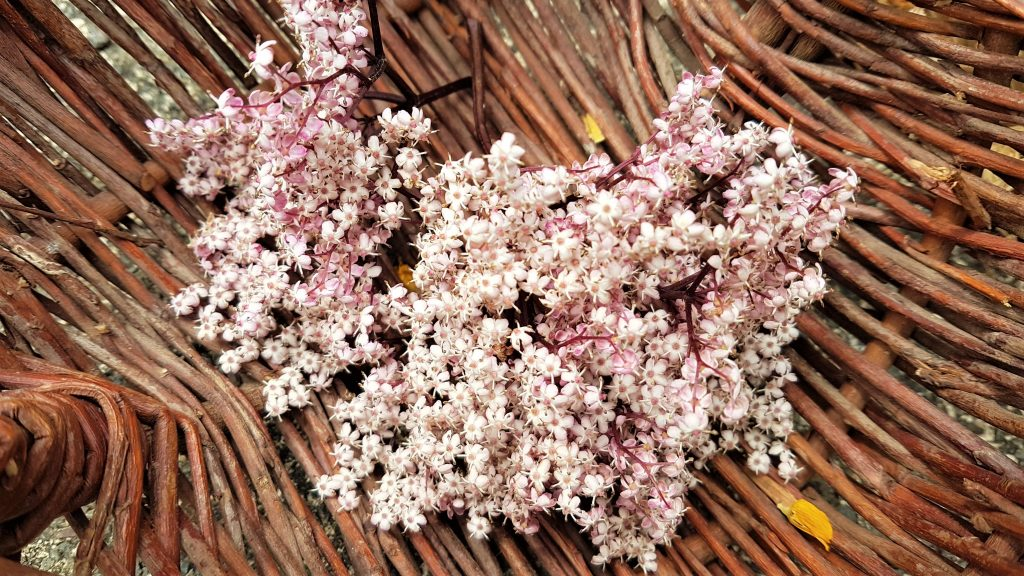 Basket of pink elderflowers (black lace)