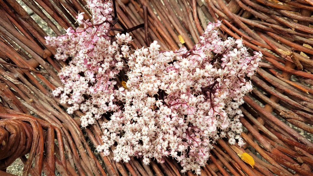 Basket of pink elderflowers (black lace)