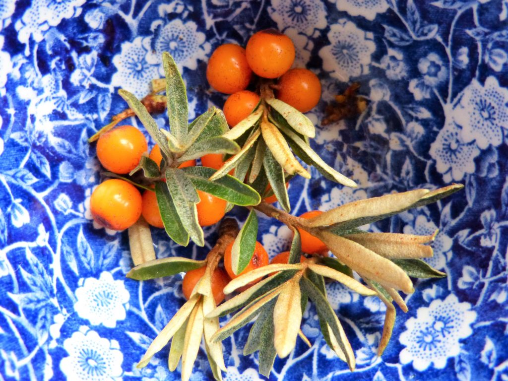 Bowl of sea buckthorn berries