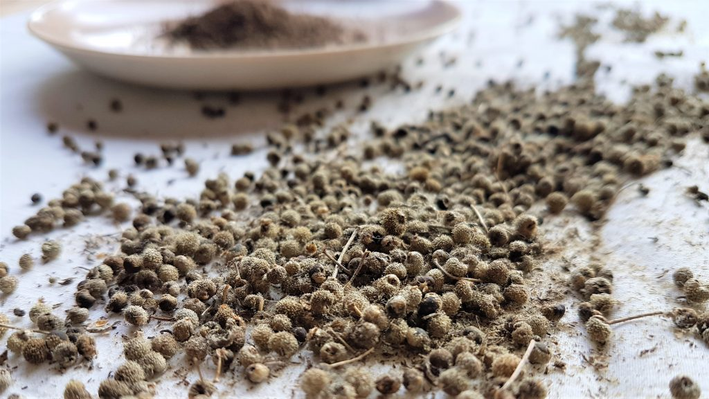 Freshly roasted cleaver seeds ready to grind