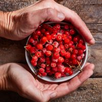 A bowl of frozen wild rowan berries