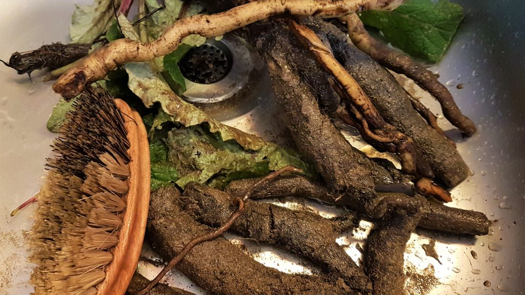 Cleaning up burdock roots