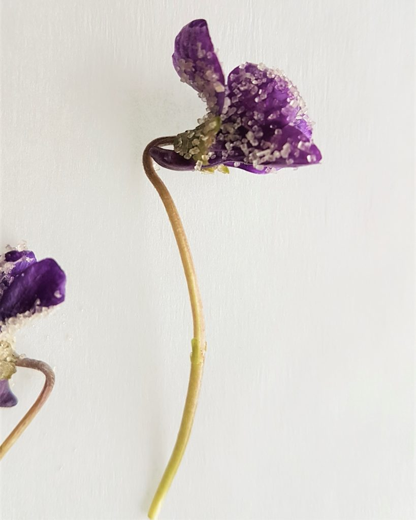 A sculptured-shaped violet from a wild food foraging course