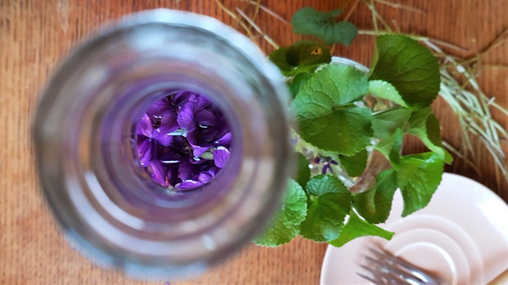 Using  wild violets in food and medicine with a professional forager