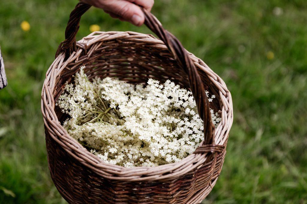 Basket of elderflowers on a foraging course