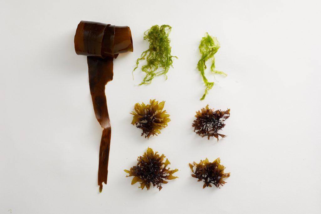 My favourite edible Cornish seaweeds