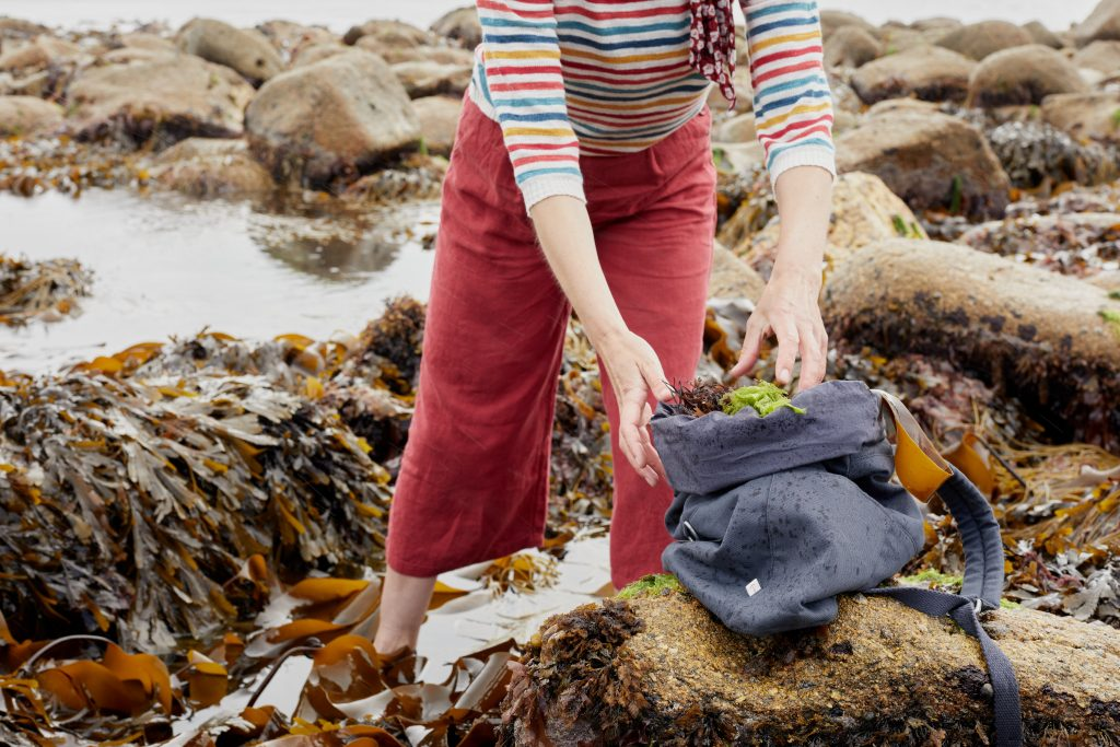 Foraging for edible seaweeds in Cornwalll