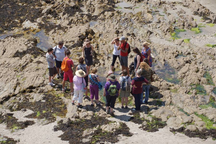 Group seaweed foraging